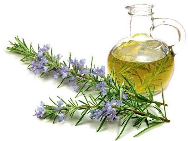 Розмарин використовується в медицині, косметології та навіть в кулінарії