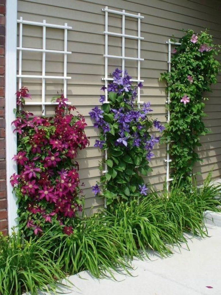 Затініть прикореневу зону клемантисів однорічними рослинами