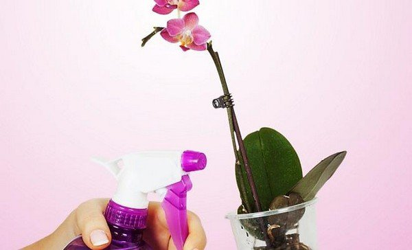 Для орхідей розчин зі спиртом не підійде!