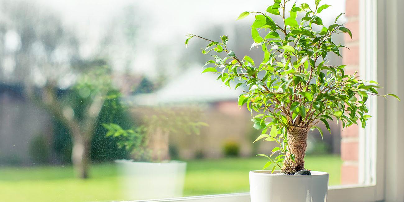 Кімнатні рослини, що очищують повітря